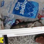 Our Kokanee ended up freezing in the Engel Deep Blue 65 cooler.